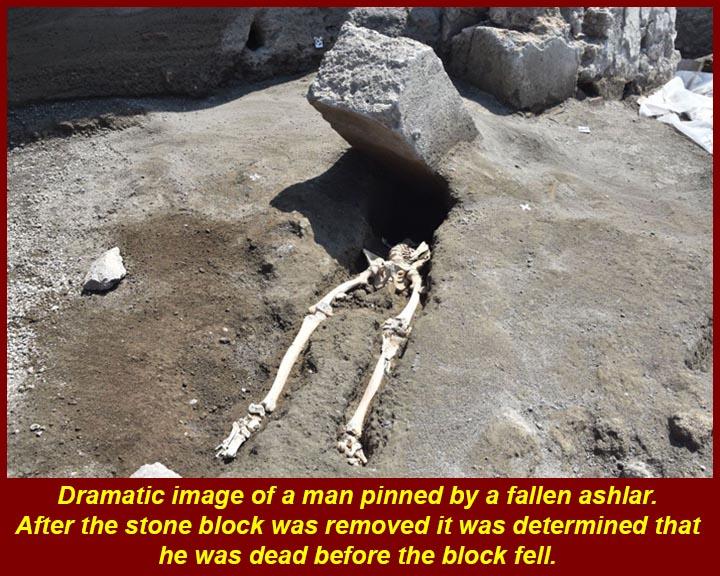 http://www.mmdtkw.org/ALRIVes0238PinnedSkeleton.jpg