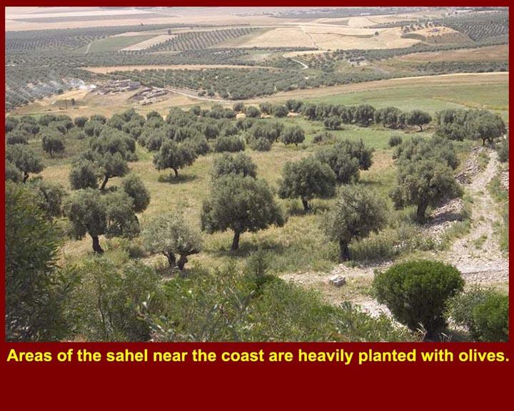 http://www.mmdtkw.org/CNAf0113AgricultureOlives.jpg