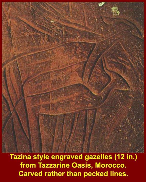 http://www.mmdtkw.org/CNAf0151Tazina Gazelles.jpg